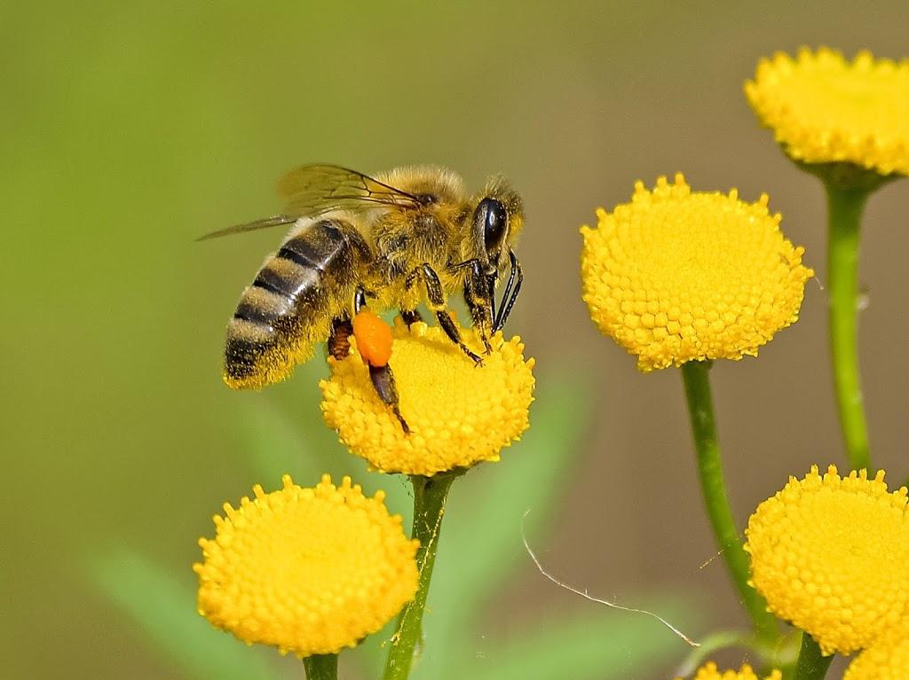 Honey Bees Secret Facts | Bee